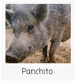 panchito.png
