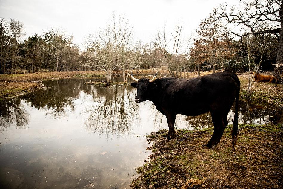 Harvey Austin Farm Sanctuary February 20