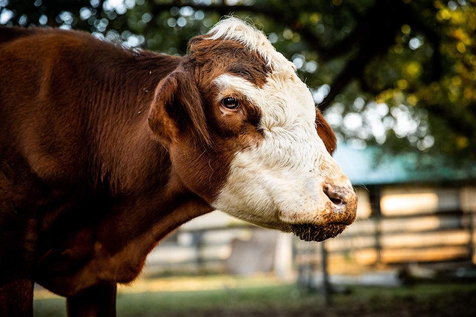 Austin Farm Sanctuary September 2020 (ed