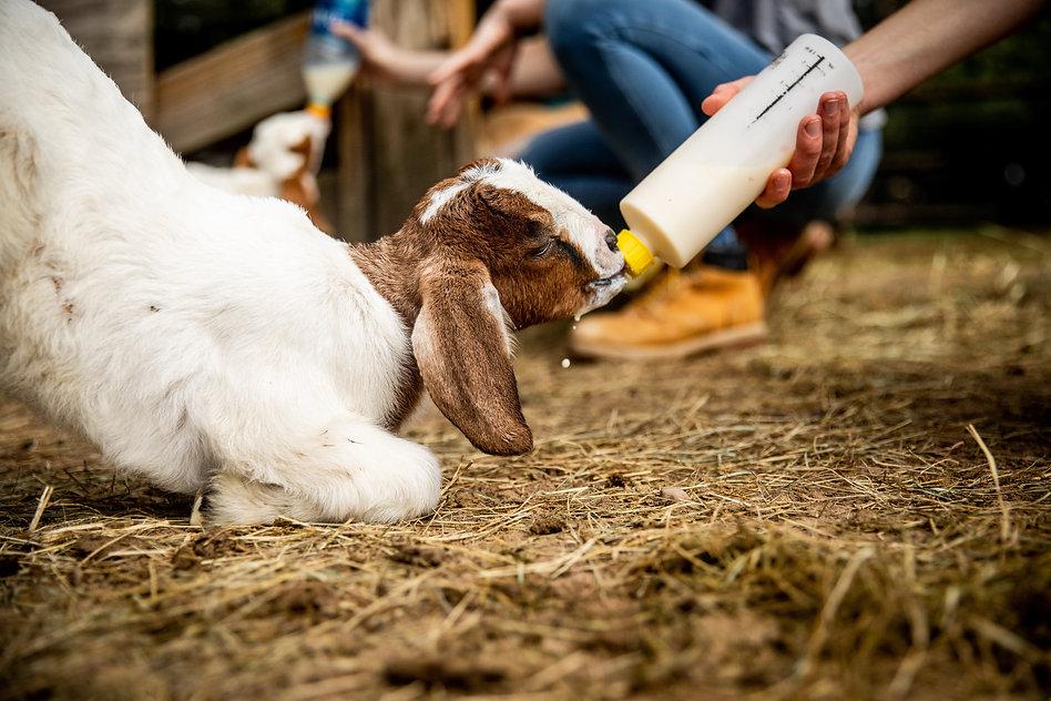 Wawa Austin Farm Sanctuary June 2021-080