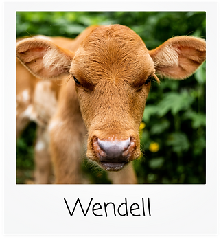 Wendell.png