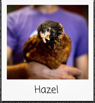 Hazel.png