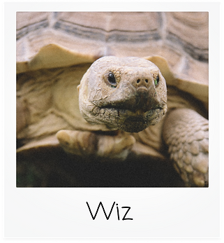 wiz.png