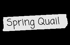 Spring Quail nametag.png