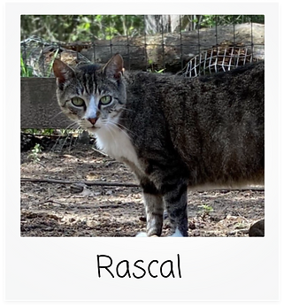 rascal.png