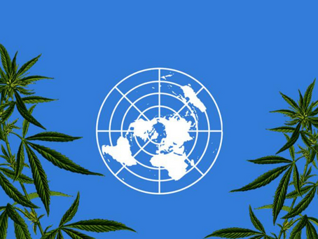 U.N. Removes Cannabis From List Of Most Dangerous Substances