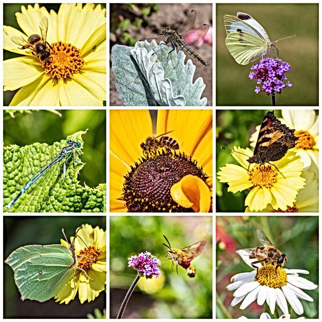 Série photos sur les insectes qui nous entourent