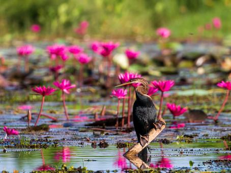 Paradise just 30 mins away... Thalangama Lake Birdlife