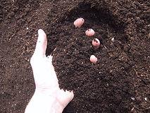 new soil in hand.jpg