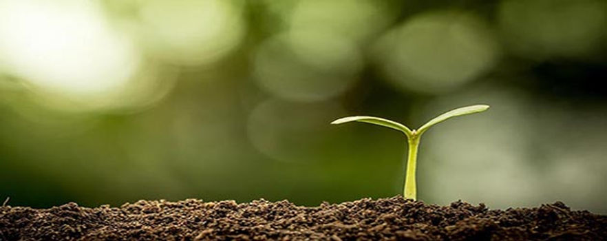 soil with baby plant.jpg