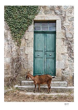 Den grønne døra
