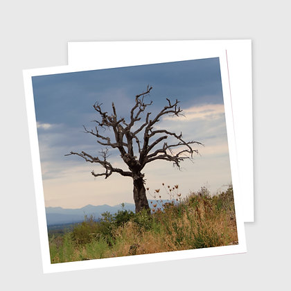 GAMMELT TRE, dobbelt kort