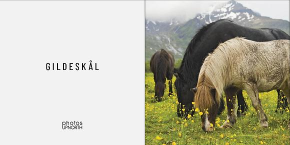 Hester, Gildeskål