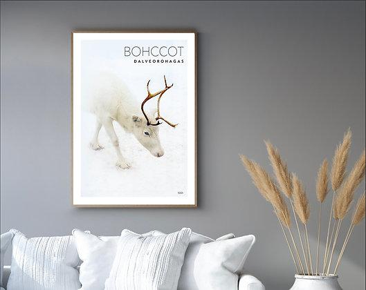 Bohccot