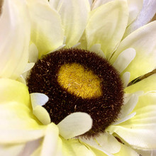 White sunflower center