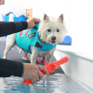 Dog being motivated at the pool