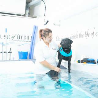 Dog with hydrotherapist in the pool