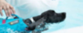 Dog in the pool with a float coat on at House of Hydro