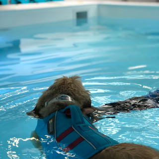 Dog swimming at House of Hydro