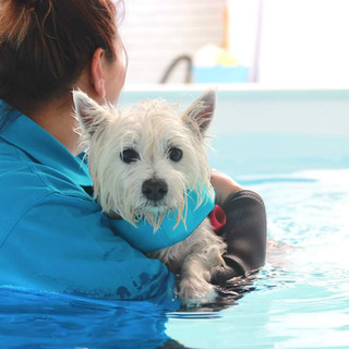 Dog being craddled the pool