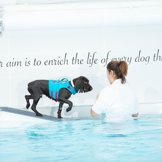 Dog entering the pool with hydrotherapist