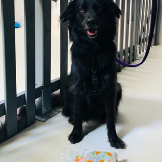 Dog receiving an Easter treat