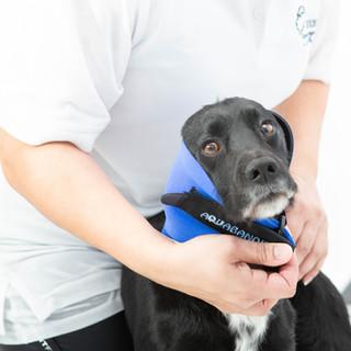 Dog wearing an ear protector