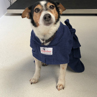 Dog wearing Dog Robe