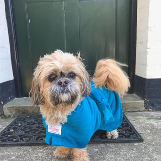 Dog wearing Dog Robe at home