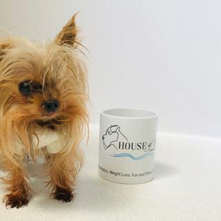 Small dog by House of Hydro mug