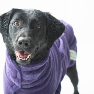 Dog wearing coat