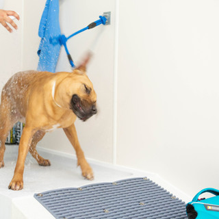 Dog being showered