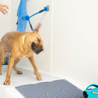 Dog being showered