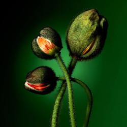 Fotografie Kouzlo květů