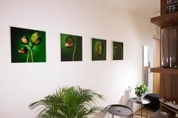 Fotky do vstupní haly