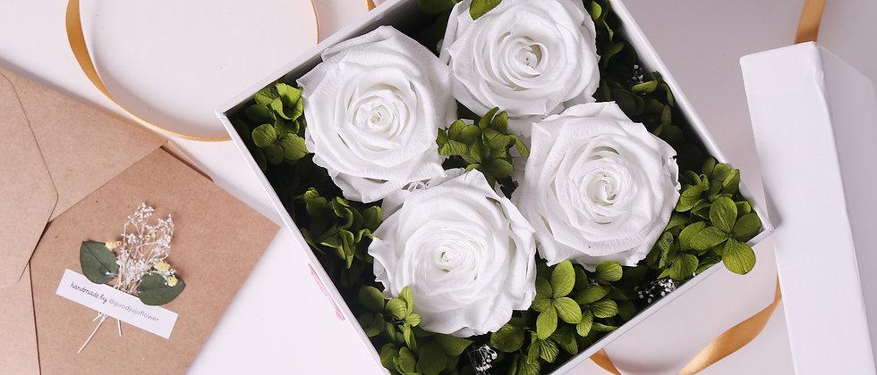 White Eternal Roses