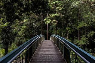 nature_bridge.jpg