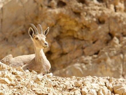 10 redenen waarom je volgende reis naar de Negev zou moeten zijn