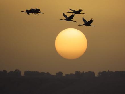 VIDEO: Vogeltrekseizoen officieel van start bij KKL-JNF's Hula meer
