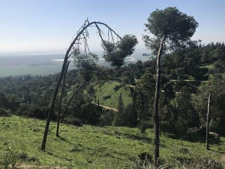 Help mee om het JNF Balfour woud te herstellen