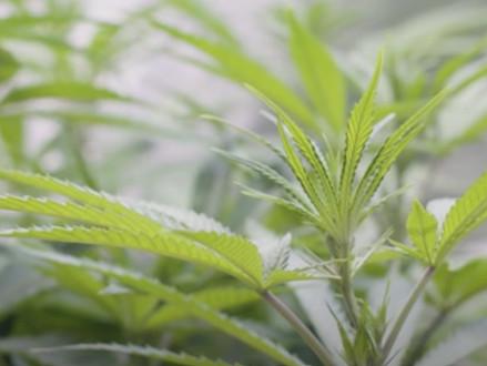 Nieuwe synthetische moleculen kunnen de behandeling met cannabis transformeren