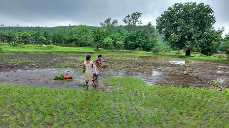 women planting rice in the village.jpg