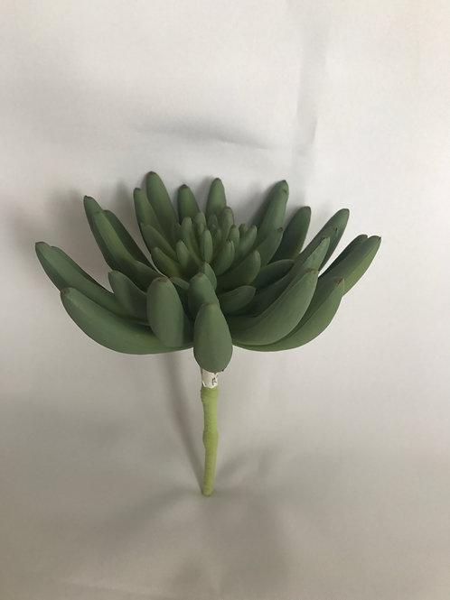 Small Juicy Succulent