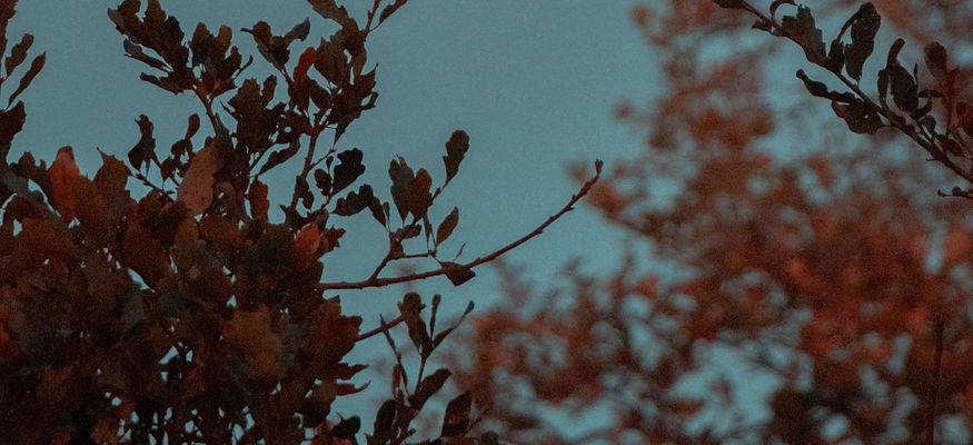 pexels-griffin-wooldridge-3654869_edited