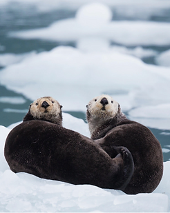 NYT-When the Otters Vanished, Everything