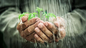 in-the-rain-old-mans-hands-holding-young