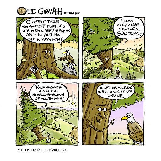 Old-growth-13-ns.jpg