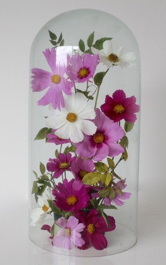 Bell jars filled with cosmos for a summer event.