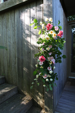 An oasis free garland filled with English scented roses.