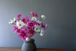 A simple bowl of cosmos from the garden